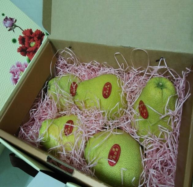 紅文旦柚 1